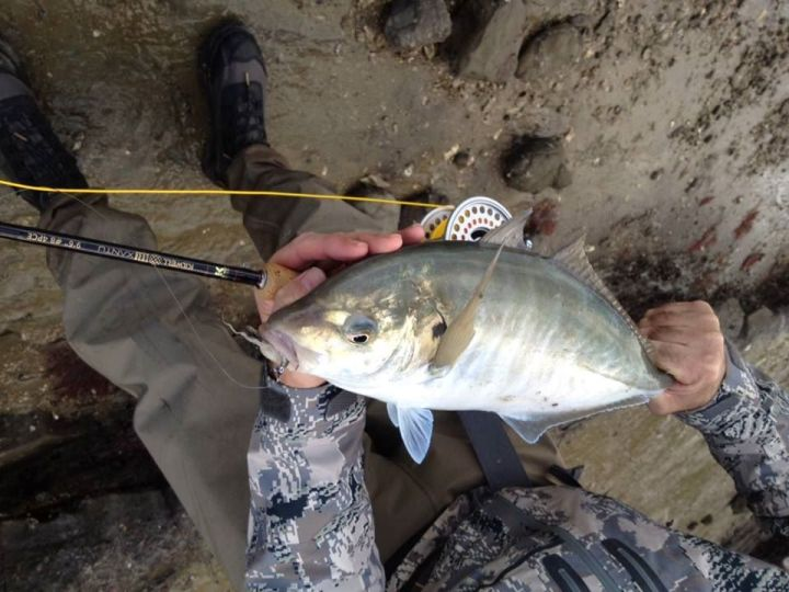 Fly caught trevally