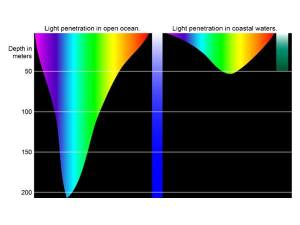 Light penetration