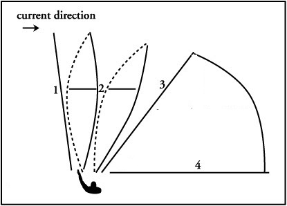 Diagram Of Angler Fish. Diagram. Find Image About Wiring Diagram ...