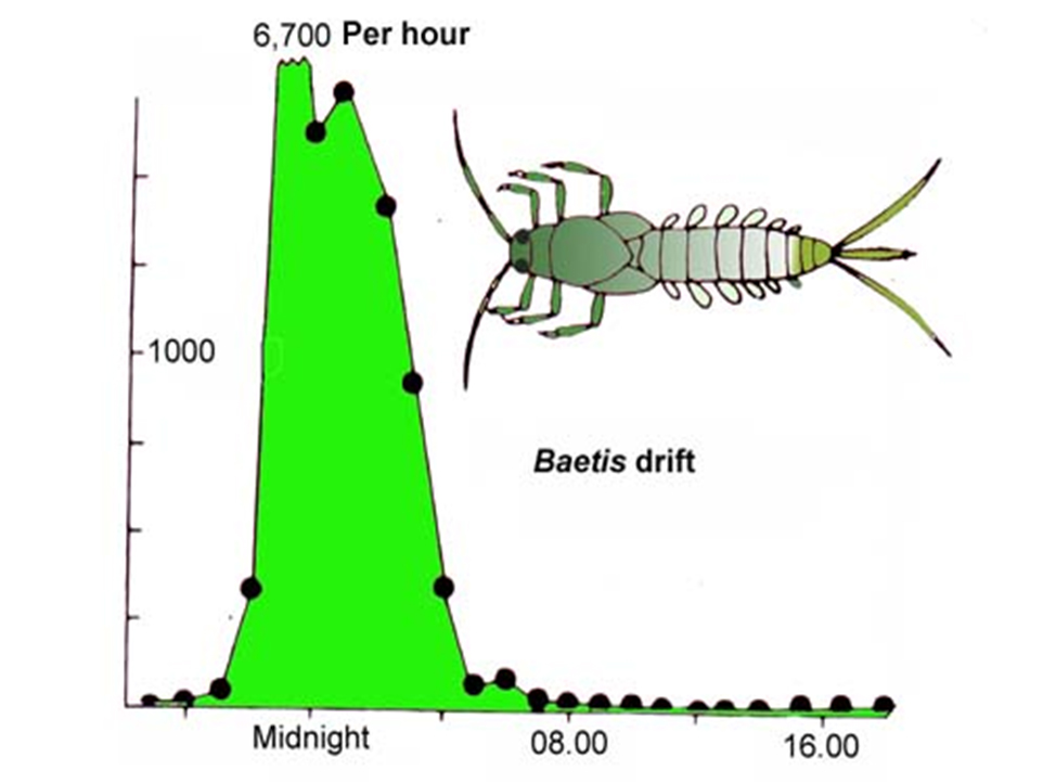 Why Is Fly Fishing In Freshwater Better At Night Active Angling
