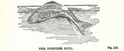 Porpoise roll
