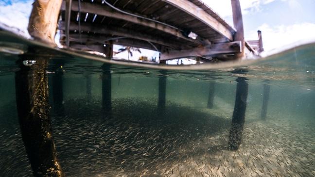 Shade under wharf