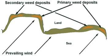 weed deposits