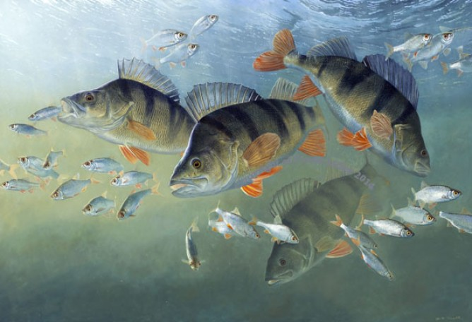 Perch - David Miller - Striped Assassins