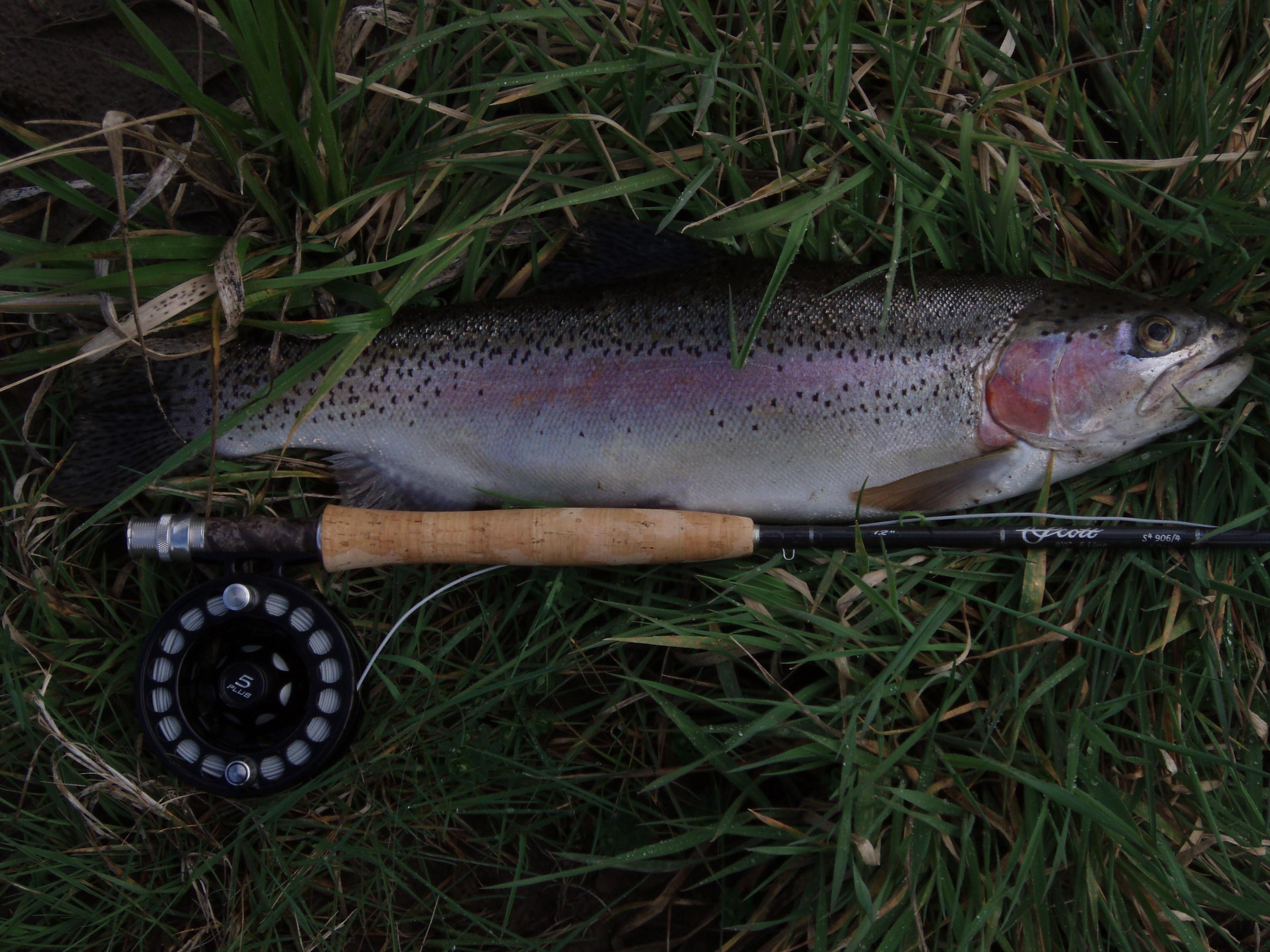 FISHING SWIRLING EDDIES – Active Angling New Zealand