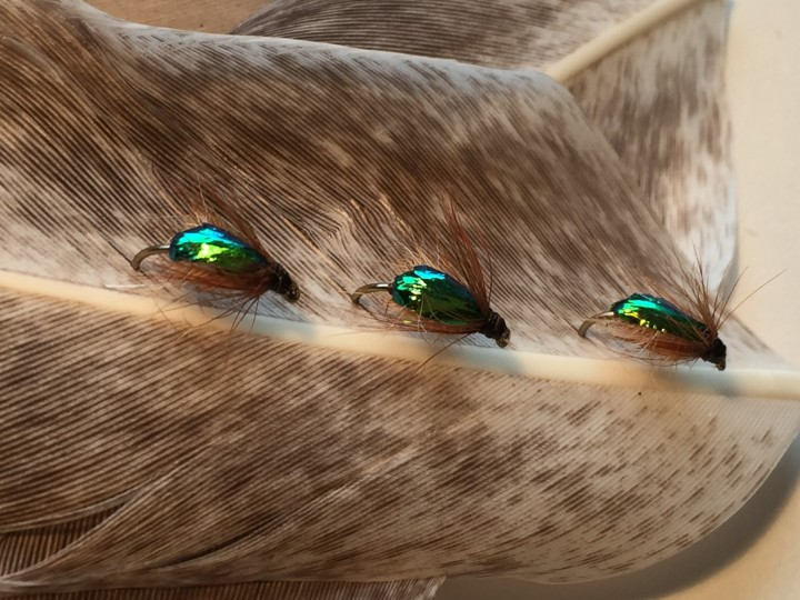 Manuka beetle