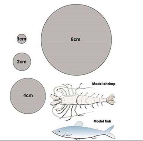 Flounder discs