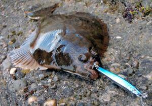 flounder on metal