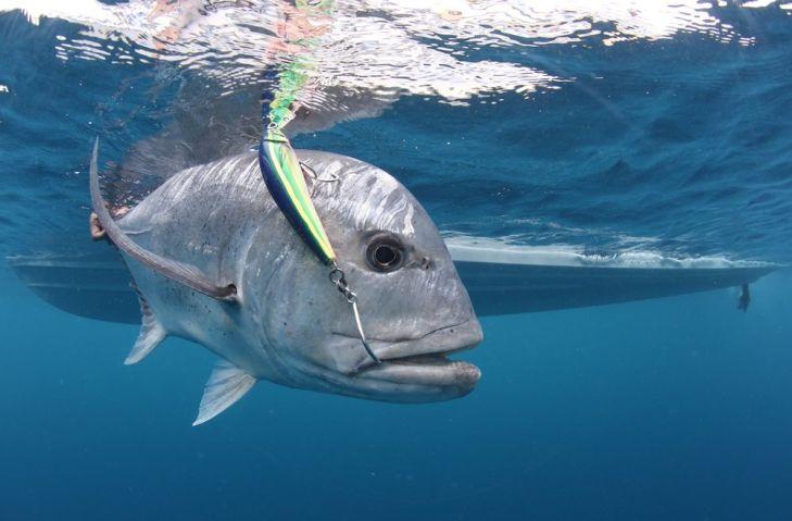 GT with Lure (Al McGlashan - www.sportsfishingmag.com)