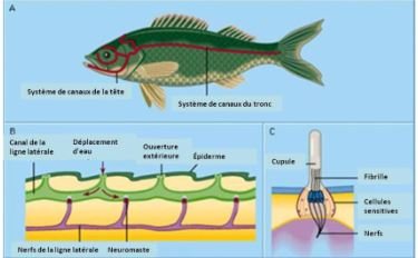 image-of-fish-in-french