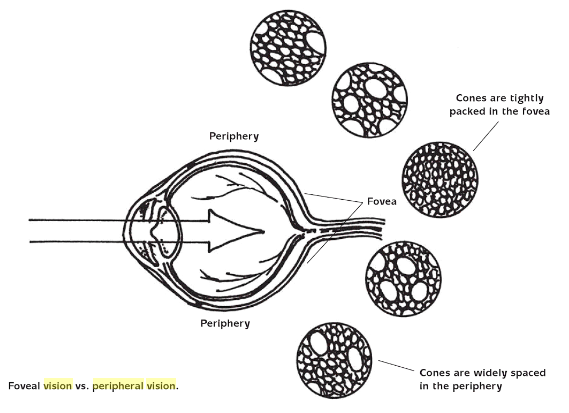 eye-foveal-vs-peripheral